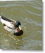 Duck - Animal - 011315 Metal Print