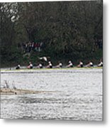 Duck Chasing The Boat Race Metal Print