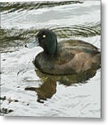 Duck Day Afternoon Metal Print