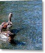 Duck Duck Metal Print