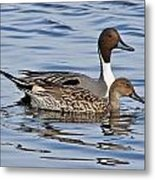 Duck Duo Metal Print