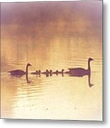 Duck Family Metal Print
