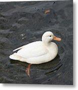 Duck Getting Feet Wet Metal Print