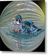 Duck In A Bubble  Metal Print
