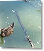 Duck In Pond Metal Print