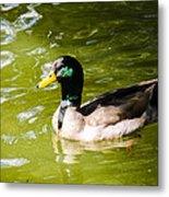 Duck In The Park Metal Print