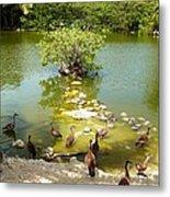 Duck Island Metal Print