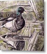 Duck Of Pond Metal Print