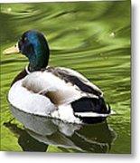 Duck On A Green Pond Metal Print by Tony Reddington