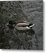 Duck On A River Metal Print