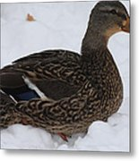 Duck Playing In The Snow Metal Print