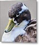 Duck Portrait Metal Print