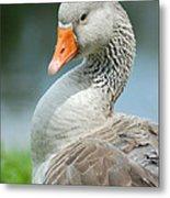 Duck Pose Metal Print