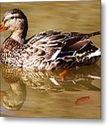 Duck Reflection Metal Print