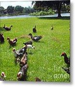 Duck Season Metal Print