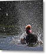 Duck Shower Metal Print