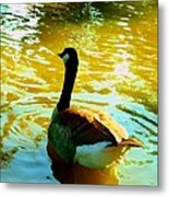 Duck Swimming Away Metal Print