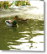 Duck Swimming In A Frozen Lake Metal Print