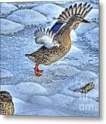 Duck Take-off Metal Print
