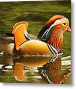 Duck Wild - Mandarin Metal Print by DerekTXFactor Creative