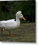 Duck With Stylish Hair Metal Print