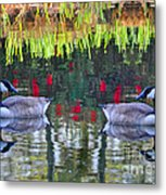 Duckland Pond Reflections Metal Print