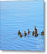Ducklings Day Out Metal Print by Kaye Menner