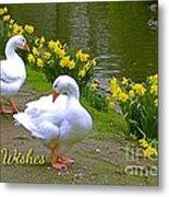 Ducks And Daffodils Greeting Metal Print