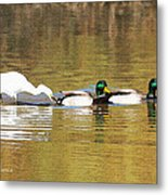 Ducks And Egret Metal Print