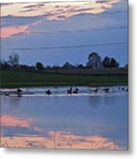 Ducks And Geese At Sunset Metal Print