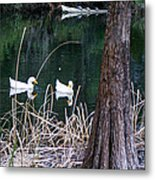Ducks And Turtles Metal Print