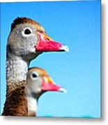 Ducks At Attention Metal Print