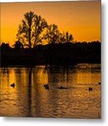 Ducks At Sunrise On Golden Lake Nature Fine Photography Print  Metal Print