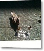 Ducks At The American Indian Museum Metal Print
