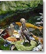 Ducks At The Koi Pond Metal Print