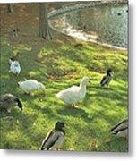 Ducks At The Park Metal Print