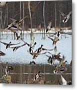 Ducks Away Metal Print
