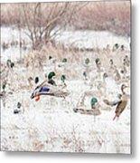 Ducks Metal Print