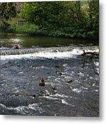 Ducks Enjoying The Open Air Metal Print