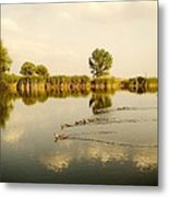 Ducks Family Metal Print