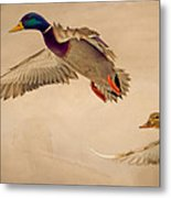 Ducks In Flight Metal Print