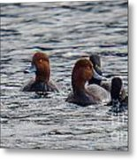 Ducks In Pond Metal Print