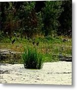Ducks Landing Metal Print