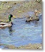 Ducks Unlimited Metal Print