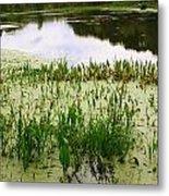 Duckweed Reflection Metal Print