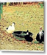 Ducky Afternoon Metal Print