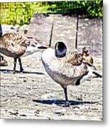 Ducky Dance Metal Print