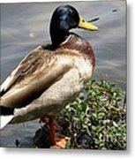 Ducky Duck Metal Print