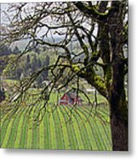 Dundee Hills Wine Country Metal Print