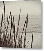 Dune Grass In Early Spring Metal Print